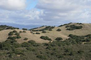 Marks Ranch
