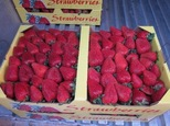 berryflat-med