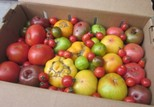 Toybox of Heirloom Tomatoes